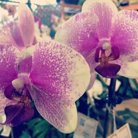 Photo taken at The Home Depot by Caitlin C. on 3/22/2014