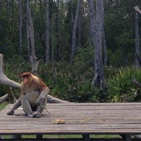 Photo taken at Labuk Bay Proboscis Monkey Sanctuary by Jade C. on 9/6/2015