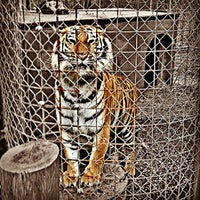 Photo taken at Exotic Feline Rescue Center by Bryant M. on 5/9/2013