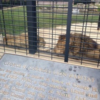Photo taken at George H. Carroll Lion Habitat by James M. on 10/11/2013