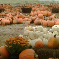 Photo taken at Pumpkin Patch @ The Markets at St Johns Town Center by EastCoast L. on 10/8/2011