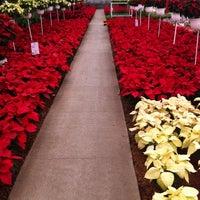 Foto tomada en Mercado de Plantas y Flores  Madreselva por Pilar I. el 10/27/2012