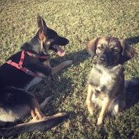 Photo taken at Echo Mountain Dog Park by Nick K. on 10/27/2014