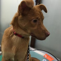 Photo taken at Petshome Veterinary Hospital by Billy W. on 9/10/2015