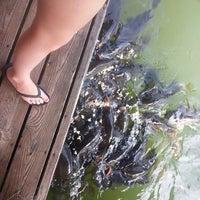 Photo taken at Choto Marina by Tracy M. on 6/14/2014