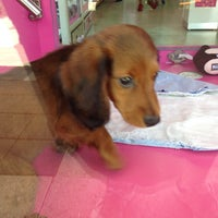 Photo taken at Diamonds & Doggies by Roger H. on 7/20/2014