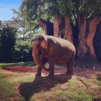 Photo taken at Zoo Miami by Ayesha N. on 9/30/2012