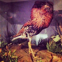 Photo taken at Ipswich Museum by Vaiarava W. on 11/27/2013