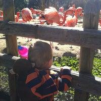 Photo taken at Sacramento Zoo by Kathleen on 1/22/2013
