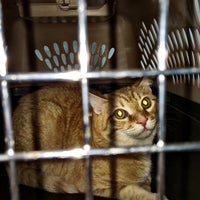 Photo taken at The Village Vets of Decatur by Oliver Z. on 6/14/2014