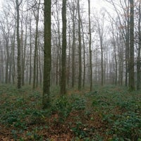 Photo taken at Vormerse Bos by Arjan on 1/1/2016