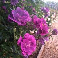 Photo taken at Roseto Ex OPP by Anna L. on 5/11/2012