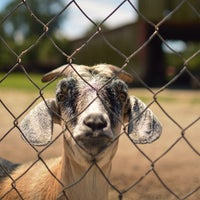 Photo taken at CJ Goat Farm by Desiree G. on 8/21/2013