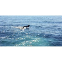 Photo taken at Boston Harbor Whale Watch by Jongsak M. on 8/26/2015