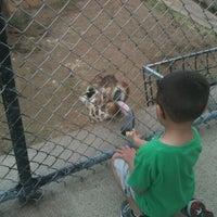 Photo taken at Abilene Zoo by Zondra P. on 3/14/2012