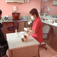 joon veterinary clinic pet shop 39 tips from 1007 vi. Black Bedroom Furniture Sets. Home Design Ideas
