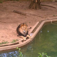 Photo taken at Great Cats at The National Zoo by Benjamin B. on 6/19/2012