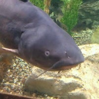 Photo taken at Bass Pro Shops by Angelica E. on 10/15/2011