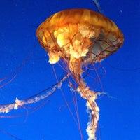 Photo taken at Vancouver Aquarium by Steve T. on 8/11/2012