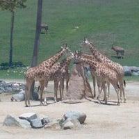 Photo taken at Safari Tram by Nate J. on 7/5/2012