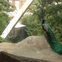 Photo taken at Bird House by PJ C. on 6/15/2012