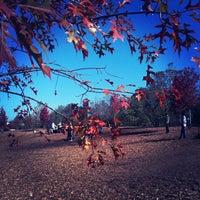 Photo taken at Piedmont Park Dog Park by Tommy B. on 11/5/2011