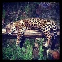 Photo taken at Gramado Zoo by Christine G. on 1/1/2012
