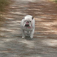 Photo taken at Dog Walk by Laura L. on 6/3/2012