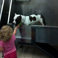 """Photo taken at Pet Supplies """"Plus"""" by Jayna C. on 6/12/2012"""