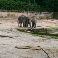 Photo taken at Zoo Taiping & Night Safari by Ridzuan H. on 12/1/2011