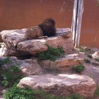 Photo taken at ABQ BioPark Zoo by Deborah D. on 4/13/2012