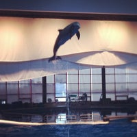 Photo taken at Dolphin Show by Scott T. on 11/26/2011