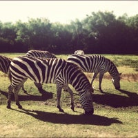 Photo taken at Lion Country Safari by Lauren N. on 6/18/2012
