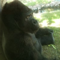 Photo taken at World of Primates at Ft. Worth Zoo by Michael B. on 6/22/2012