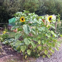 Photo taken at Fairford Leys Allotments by Ashley B. on 8/3/2011