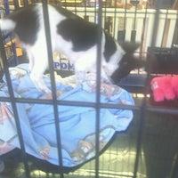 Photo taken at The Pet Corner by Kieran T. on 6/7/2012
