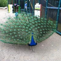 Photo taken at ABQ BioPark Zoo by Christine O. on 4/19/2012