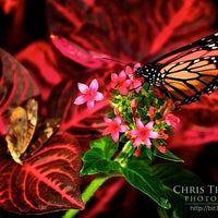 Photo taken at Krohn Conservatory by Chris T. on 5/26/2011