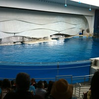 Photo taken at Dolphin Show by Courtney D. on 4/21/2012