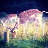 Photo taken at Knole Park by Rob M. on 7/28/2012
