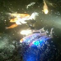 Photo taken at Kobe Japanese Steakhouse & Sushi Bar by Alice I. on 7/5/2012