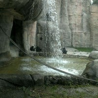 Photo taken at World of Primates at Ft. Worth Zoo by Mary H. on 4/30/2012