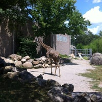 Photo taken at Roger Williams Park Zoo by Dan S. on 7/8/2012