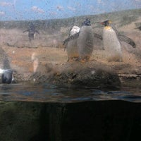 Photo taken at Penguin House at Riverbanks Zoo by Brian B. on 2/25/2012