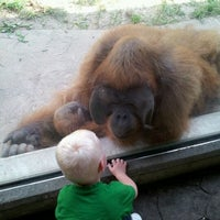 Photo taken at Saint Louis Zoo by Matt D. on 5/26/2012