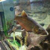 Photo taken at ECHO Lake Aquarium & Science Center by Nate O. on 3/10/2012