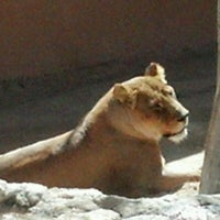 Photo taken at ABQ BioPark Zoo by Martina P. on 3/29/2012