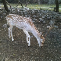 Photo taken at Natural Bridge Wildlife Ranch by Darla H. on 9/1/2012