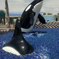 Photo taken at SeaWorld San Antonio by Joshua B. on 7/17/2012