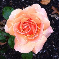 Photo taken at Dunedin Botanic Garden by David O. on 3/18/2012